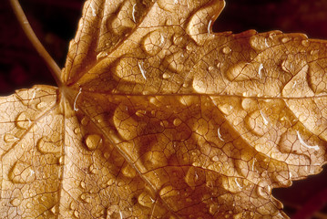 drops on dried leaf in autumn
