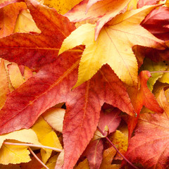 leafs carpet in autumn