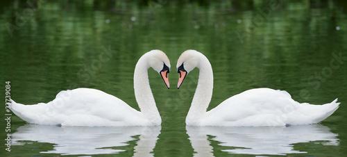 Papiers peints Cygne Two swans