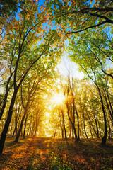 evening autumn sun