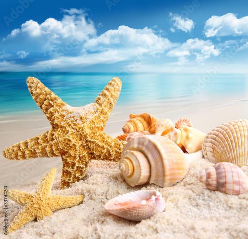 Leinwandbild Motiv Starfish and seashells on the beach