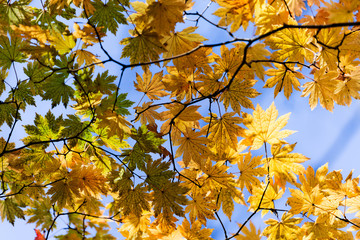 trace strange autumn
