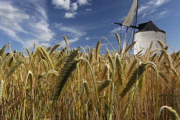 Epis de blé et moulin au vent