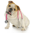 dog with stethoscope