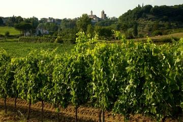 Il vino ed il paese di Vinci