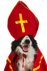 Dog as Dutch Sinterklaas
