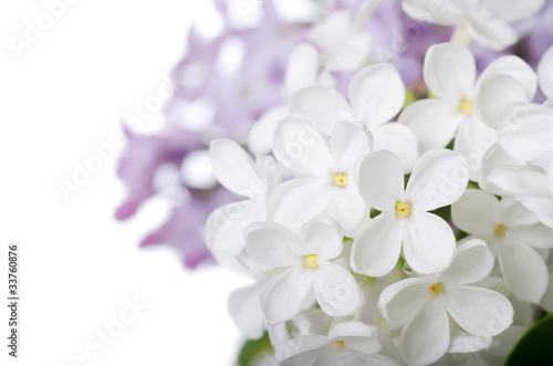Papiers peints Lilac Beautiful lilac isolated on white background