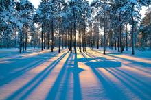 "Постер, картина, фотообои ""Sunset in a winter forest."""