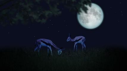 Couple of deers in the moonlight