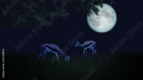 Couple of deers in the moonlight
