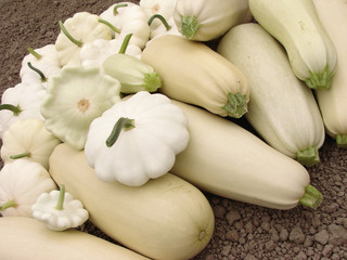 squashes harvest