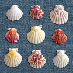 six sea Shells on blue fabric