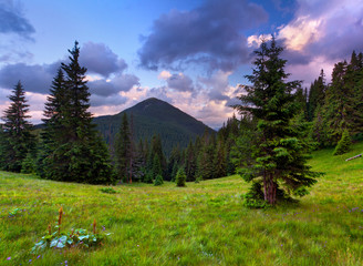 Summer landscape in the mountain. Sunset