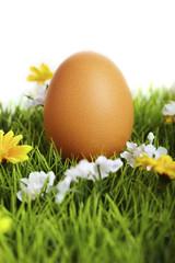 Fresh easter egg