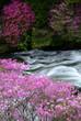 竜頭の滝とヤシオツツジ