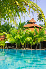 Swimming pool with coconut palm trees, vertical