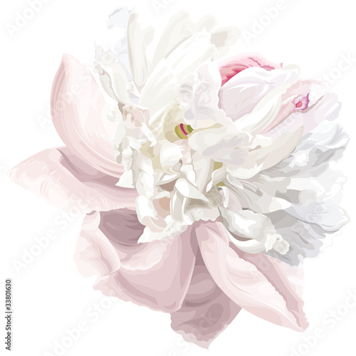 White peony flower © LisaShu