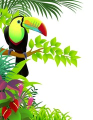 toucan bird in the jungle