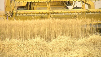 harvesting machine wheat cut