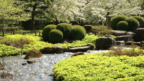 Brook in a Springtime Park with Blossoming Trees