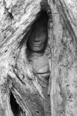 Hidden Face, Ta Prohm Temple, Angkor, Cambodia
