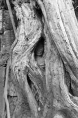 Hidden Face 1, Ta Prohm Temple, Angkor,Cambodia