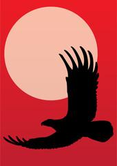 American bald eagle - vector
