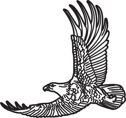 Illustration of American bald eagle in flight - vector