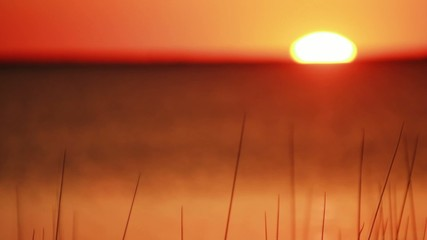 Schilf im Sonnenuntergang timelapse