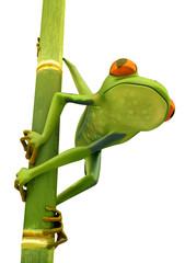 Tree frog on bamboo bole isolated