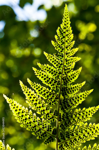 Fotobehang Planten Fern leafs with spores