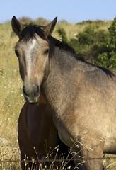 Primo piano di cavallo al pascolo