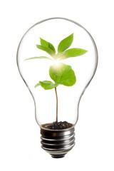 電球と新芽の環境イメージ