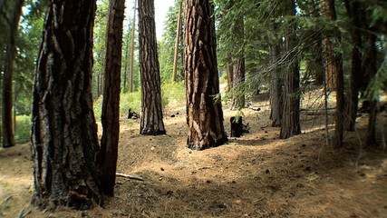 Natural Environment of a Protected National Park