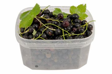 wet tasty black currant in the plastic semi transparent containe
