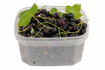 wet tasty black currant in the plastic semi transparent containe
