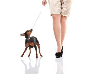 woman's legs with and small dog