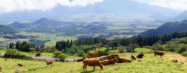 Prairie de la Plaine des Palmistes, La Réunion.