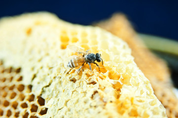 working bees on honeycells.