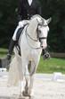 dressage chevaux