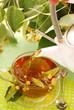 pouring linden tea