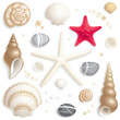 Seashell set - 33871289