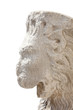 lion head on white background
