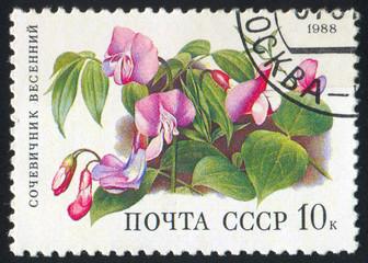 poststamp flower