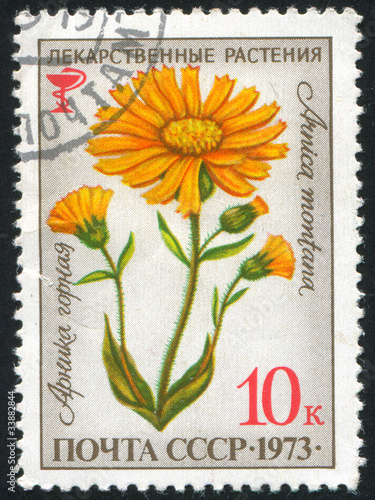 poststamp flower