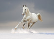 white horse with cloudy background behind