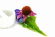 Echinacea purpurea und Globuli