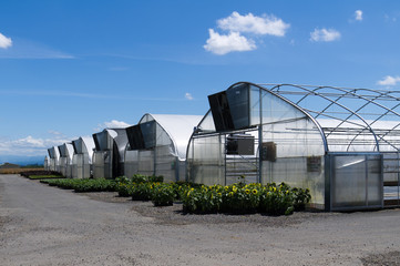 Group of greenhouses with plants