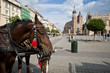 Horses on Old Town square in Krakow, Poland