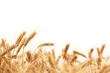 Wheat - 33896281